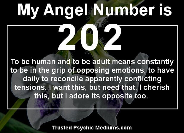 what does angel number 202 mean?