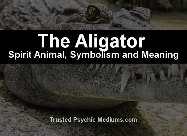 aligator crocodile meaning
