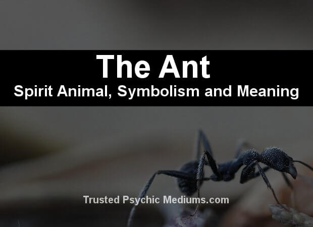 The Ant Spirit Animal
