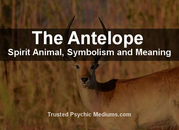 Antelope Spirit Animal