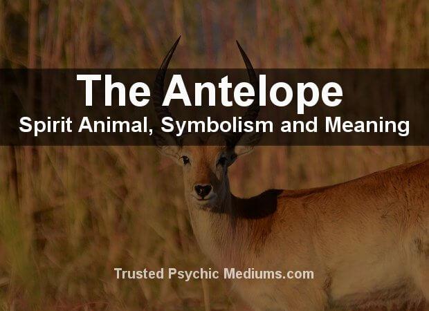 Antelope Spirit Animal