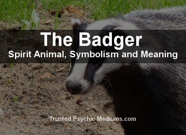 Badger Spirit Animal
