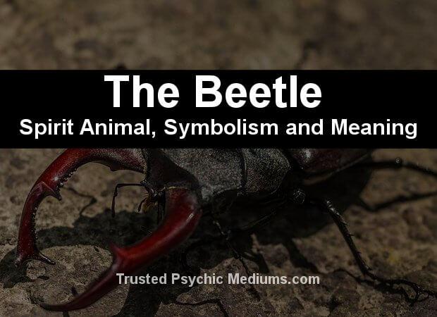 The Scarab-Beetle Spirit Animal