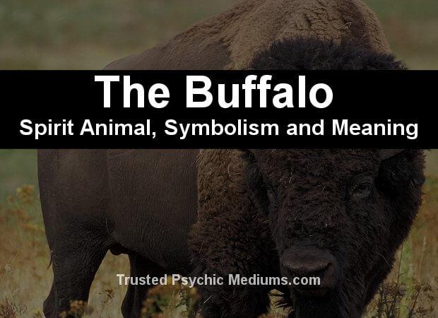 buffalo spirit animal