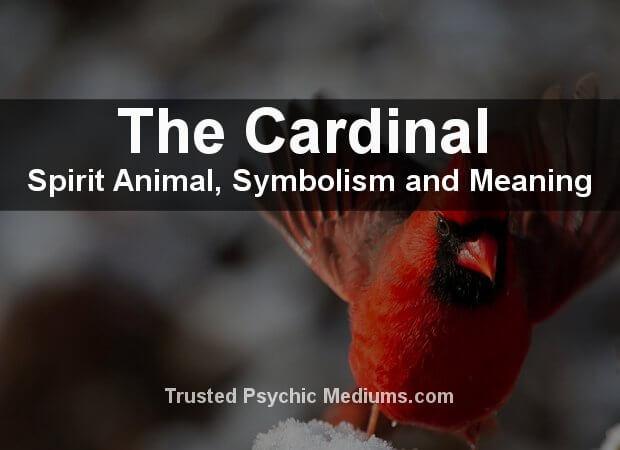 Cardinal Spirit Animal