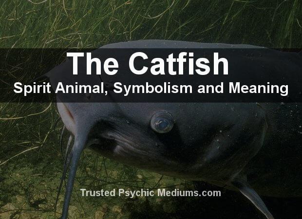 Catfish Spirit Animal