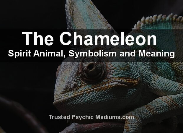 Chameleon Spirit Animal