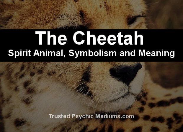 cheetah spirit animal