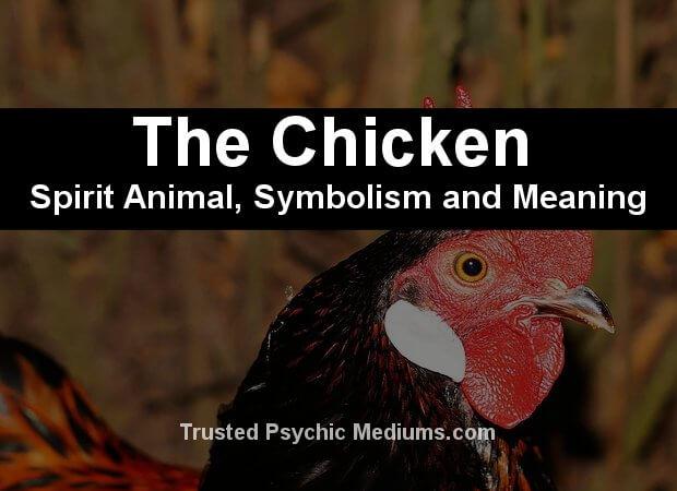 chicken spirit animal