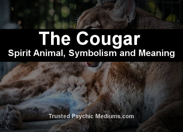 cougar spirit animal meaning