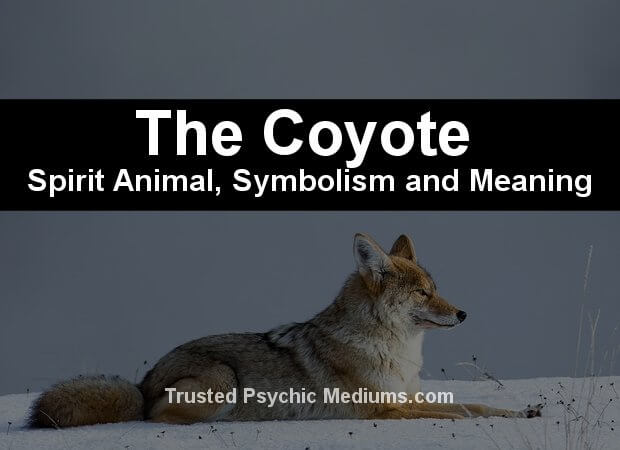 The Coyote Spirit Animal