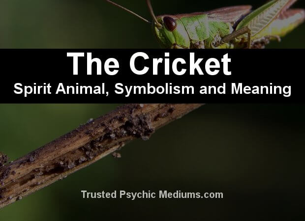 cricket symbolism