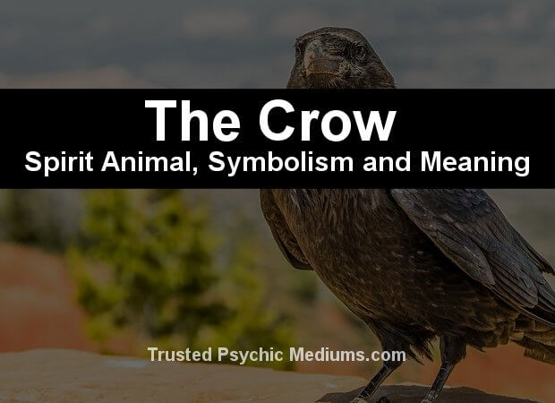 meaning of the crow spirit animal