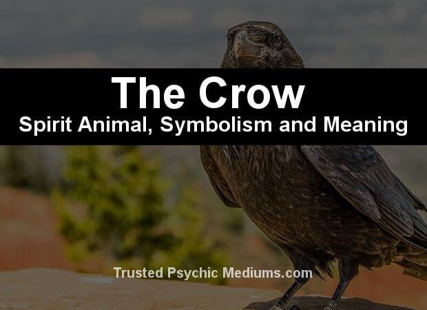 The Crow Spirit Animal