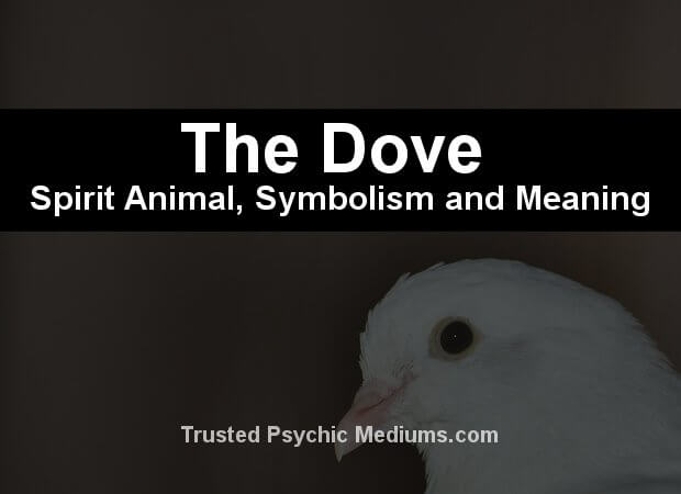 The Dove Spirit Animal