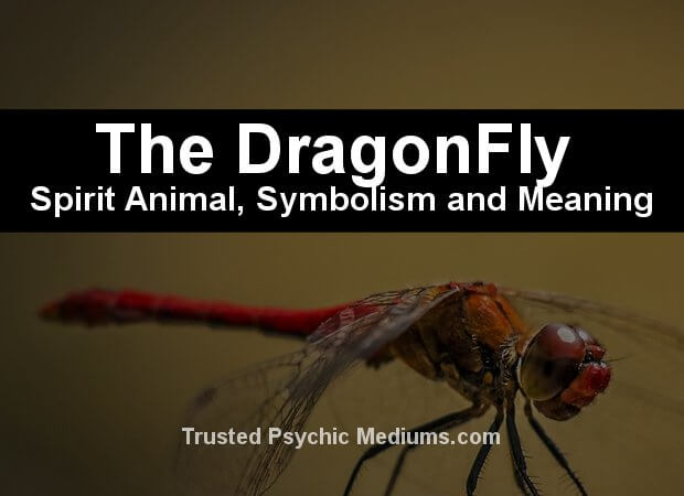 The Dragonfly Spirit Animal