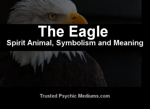 The Eagle Spirit Animal A Complete Guide To Meaning And Symbolism