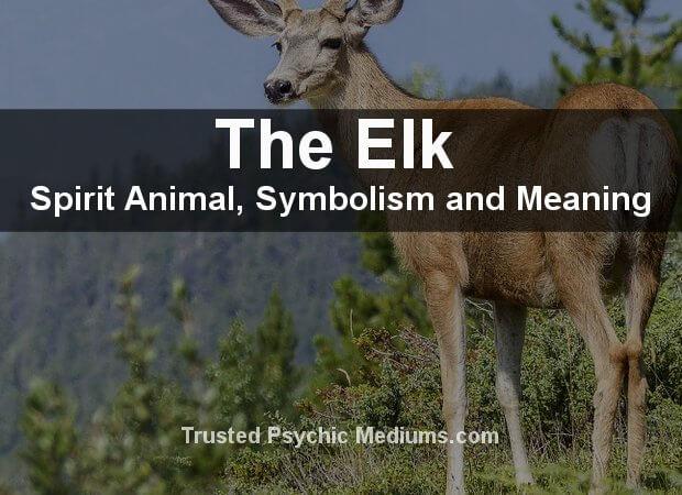 The Elk Spirit Animal