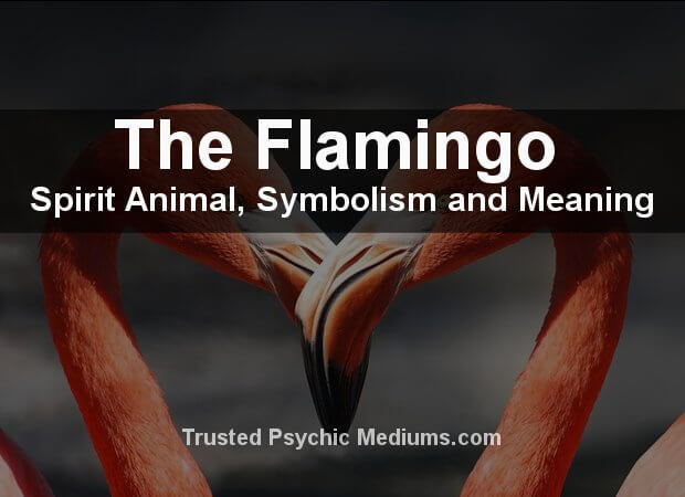 The Flamingo Spirit Animal
