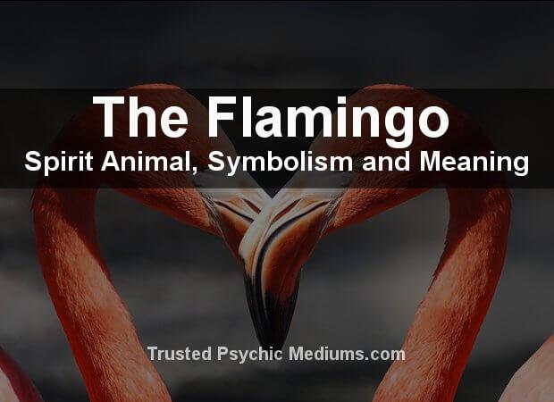 Flamingo Spirit Animal