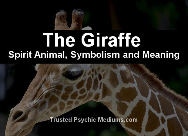 The Giraffe Spirit Animal