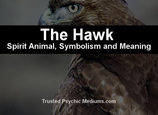 hawk symbolism