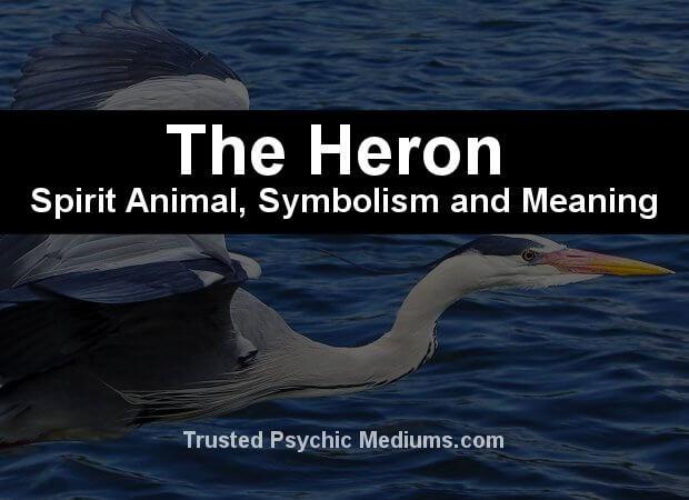 heron spirit animal