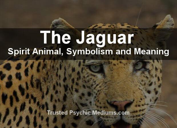 Black-Jaguar Spirit Animal