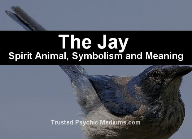 Jay meaning