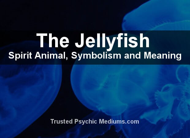 Jellyfish Spirit Animal