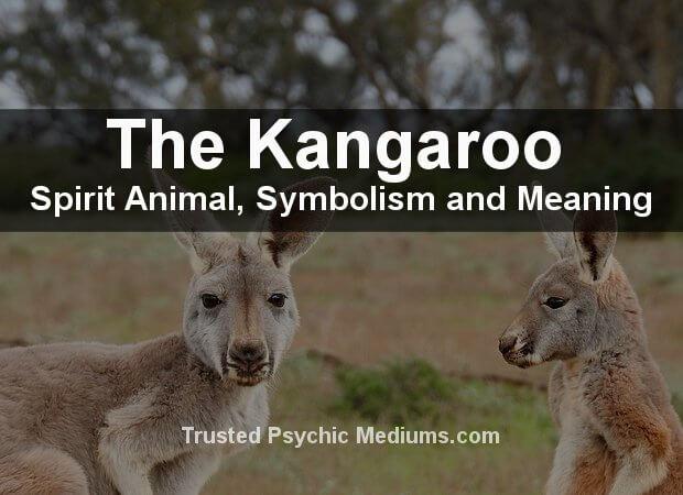 Kangaroo Spirit Animal
