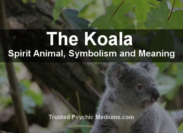 The Koala Spirit Animal