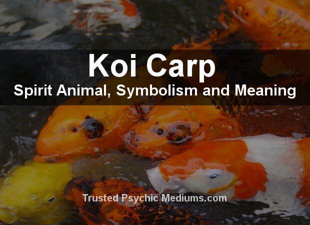 The Koi Spirit Animal
