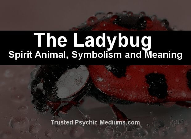 The Ladybug Spirit Animal