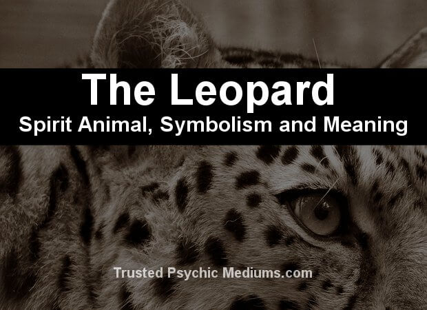 leopard spirit animal