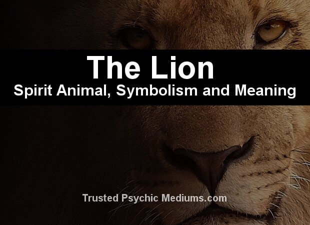 lion spirit animal meaning