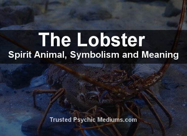 Lobster Spirit Animal