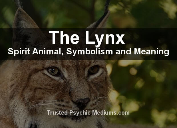 The Lynx Spirit Animal