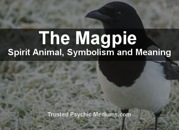 Magpie Spirit Animal