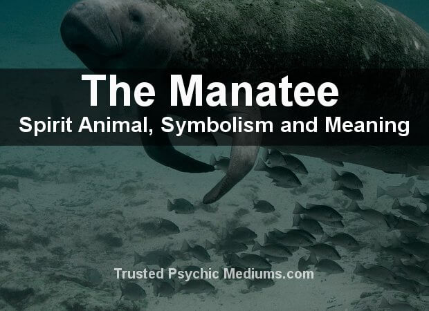 Manatee Spirit Animal