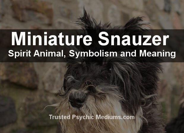 Miniature-Schnauzer Spirit Animal