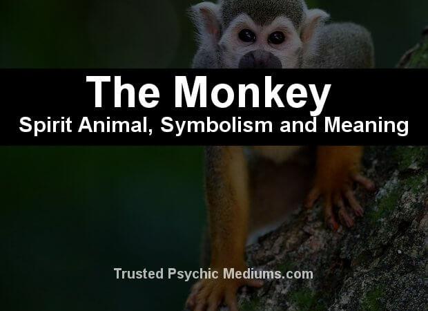 The Monkey Spirit Animal