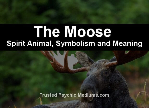 moose spirit animal