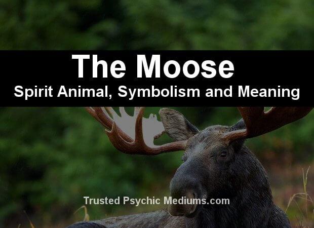 moose spirit animal