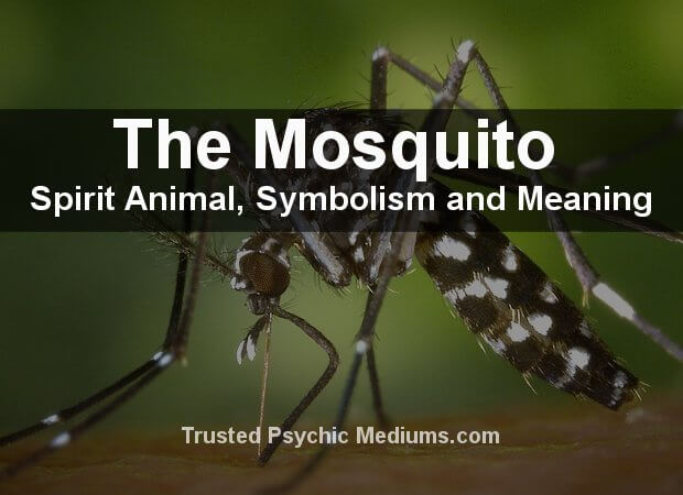 The Mosquito Spirit Animal
