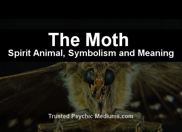 The Moth Spirit Animal