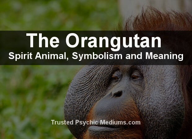 Orangutan Spirit Animal