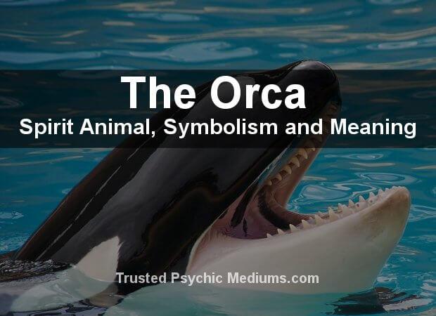 Orca Spirit Animal