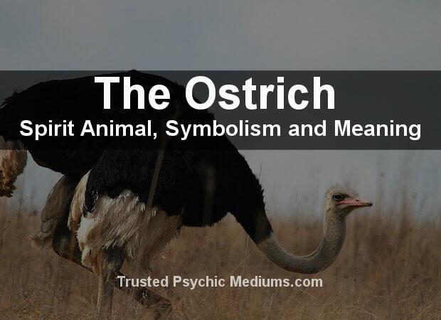 Ostrich Spirit Animal