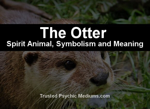 otter spirit animal